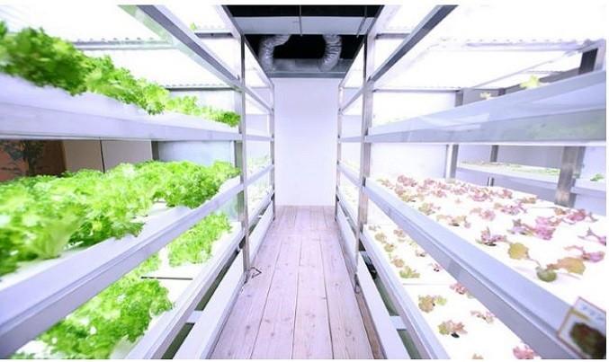 Painting the City Green: Pasona's High-Rise Urban Farm