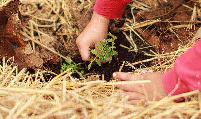 Chennai NGO to plant trees in an effort to save wildlife amidst climate change